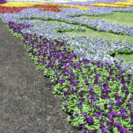floral carpet by Jan Brown Checco