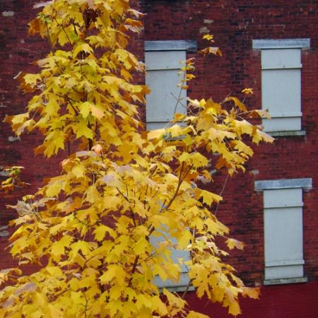 Autumn in Over-the-Rhine