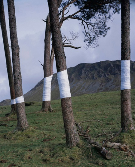 Tree, Line by Zander Olsen