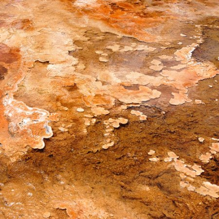 Yellowstone National Park: Form, Color and Pattern