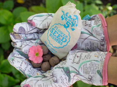 VisuaLingual Seed Bombs in Sesame Gift Set